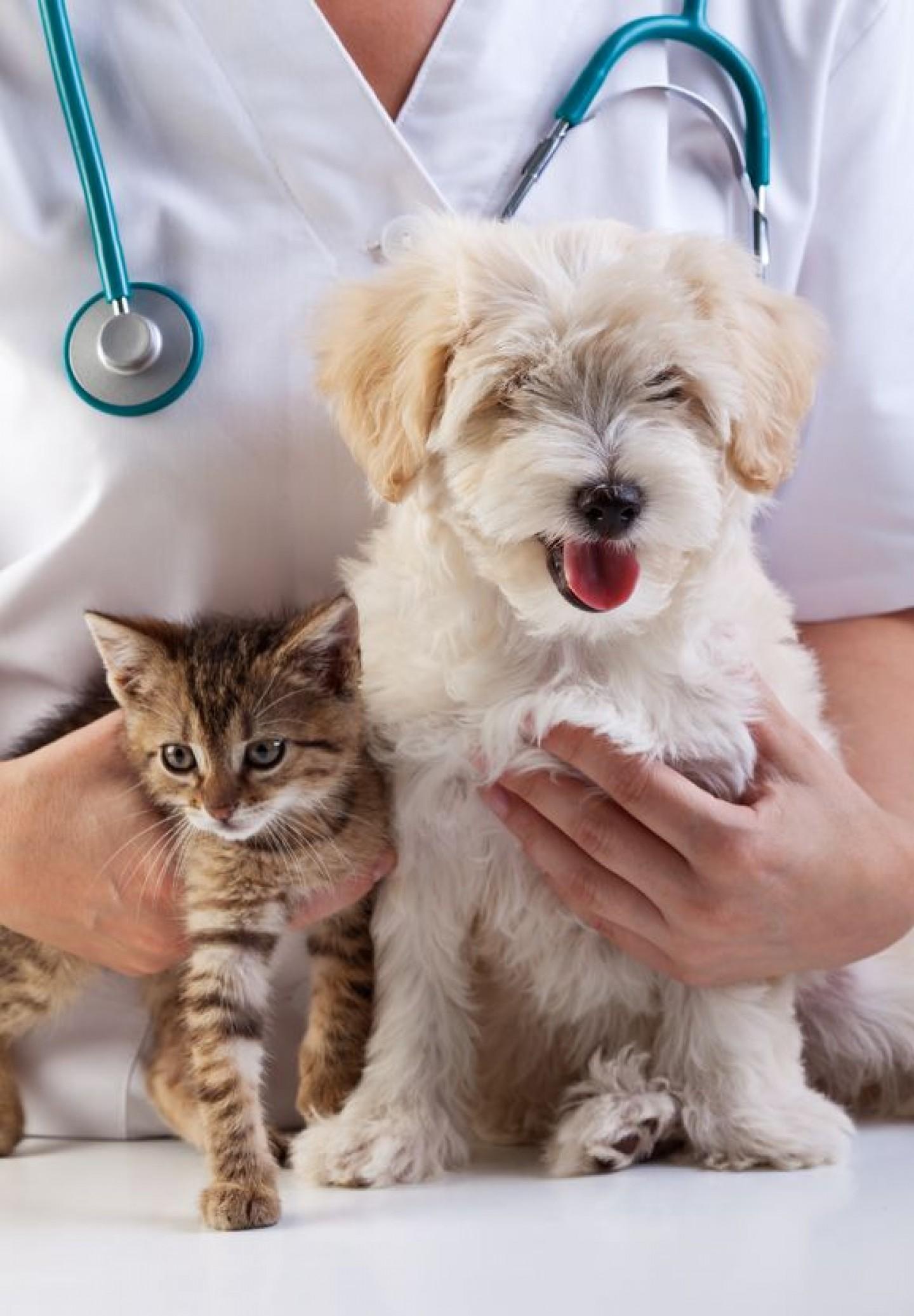 Cijepljenje Vašeg ljubimca protiv zaraznih bolesti