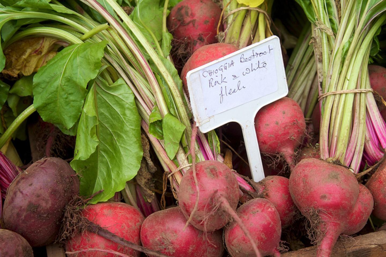 CIKLA: idealna hrana tokom hladnih zimskih mjeseci