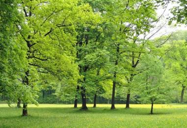Maksimir uvršten na listu najljepših parkova u Europi