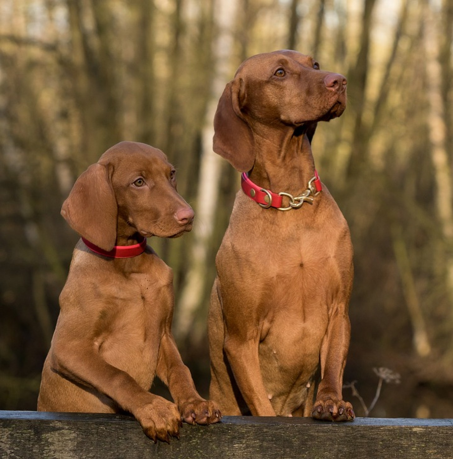 9 razloga zašto je dobro imati psa