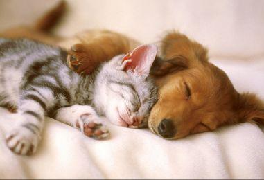 Proslava Međunarodnog dana zaštite životinja na Bundeku