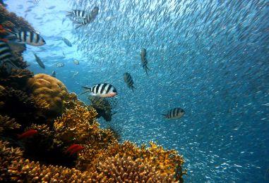 Veliki koraljni greben je mrtav