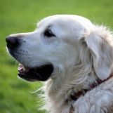 Podržavate li porez na pse?