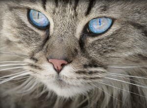 cat-1508613_960_720