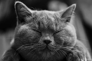 cat-1634369_960_720