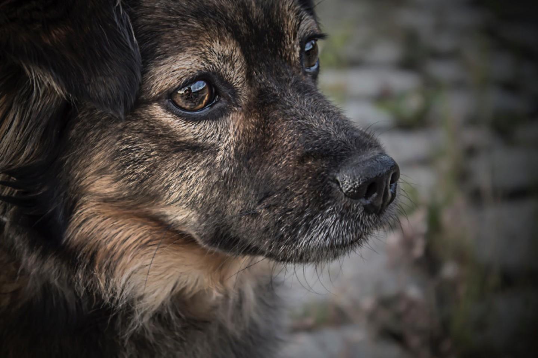 Predsjednica Kolinda Grabar-Kitarović dala podršku neubijanju pasa