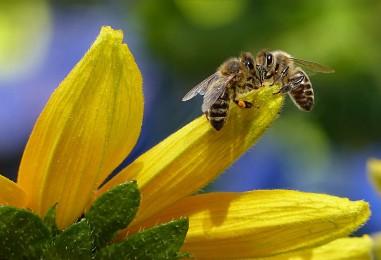 Upoznajte pčelinje proizvode