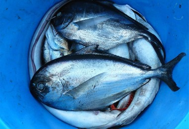 Neki gladuju, a oni bacaju ribu
