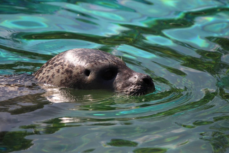 Pogledajte tko je postao novi član zoološkog vrta u Zagrebu