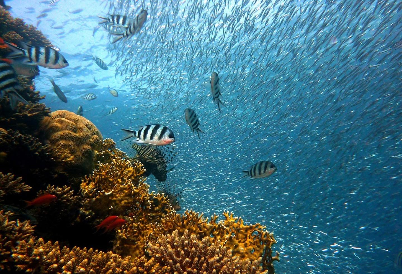 Najvrijedniji koraljni greben na svijetu