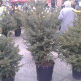 Zrinjevac počeo odvoziti božićna drvca; onima koji su imali BOR U TEGLI, pronalaze MJESTO ZA SADNJU