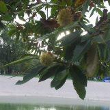 Kušanje BESPLATNIH KESTENA u subotu na Bundeku, nude i portugizec, jabučni sok…