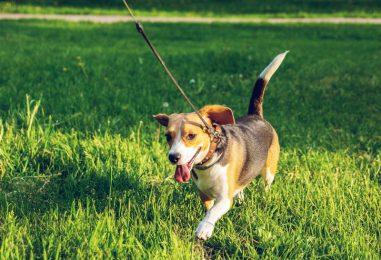 Maloljetnica zaražena koronavirusom šetala psa po Novom Zagrebu